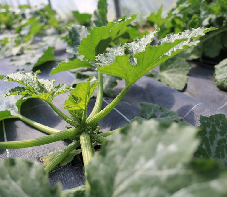 Plantes Bio-indicatrices / Maraîchage-agroforestier