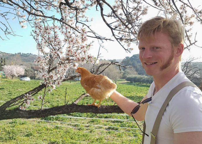 Nos poules sont arrivées, elles profitent déjà du soleil !
